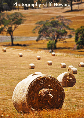 Hay rolls, Dayelsford Vic. by Cliff Howard